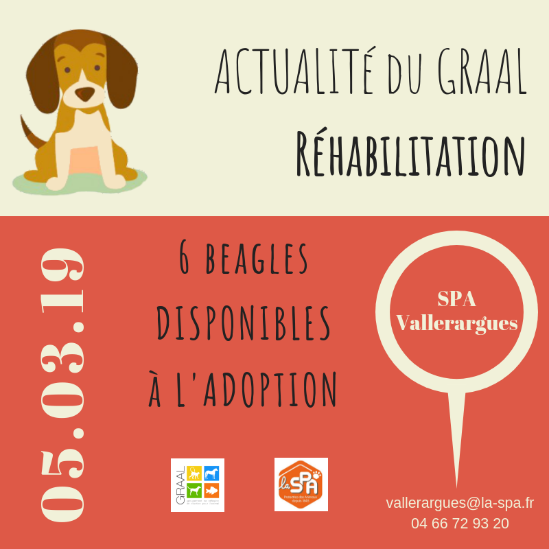 6 Beagle à l'adoption