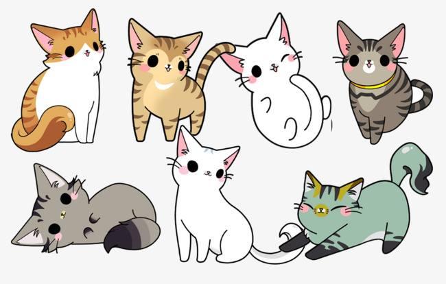 Saison des chatons