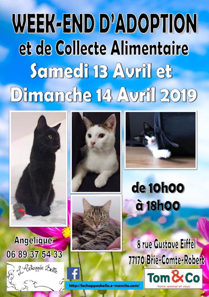 Week- end d'adoption et de collecte les 13 et 14 avril 2019 Tom and Co Brie Comte Robert servon 77