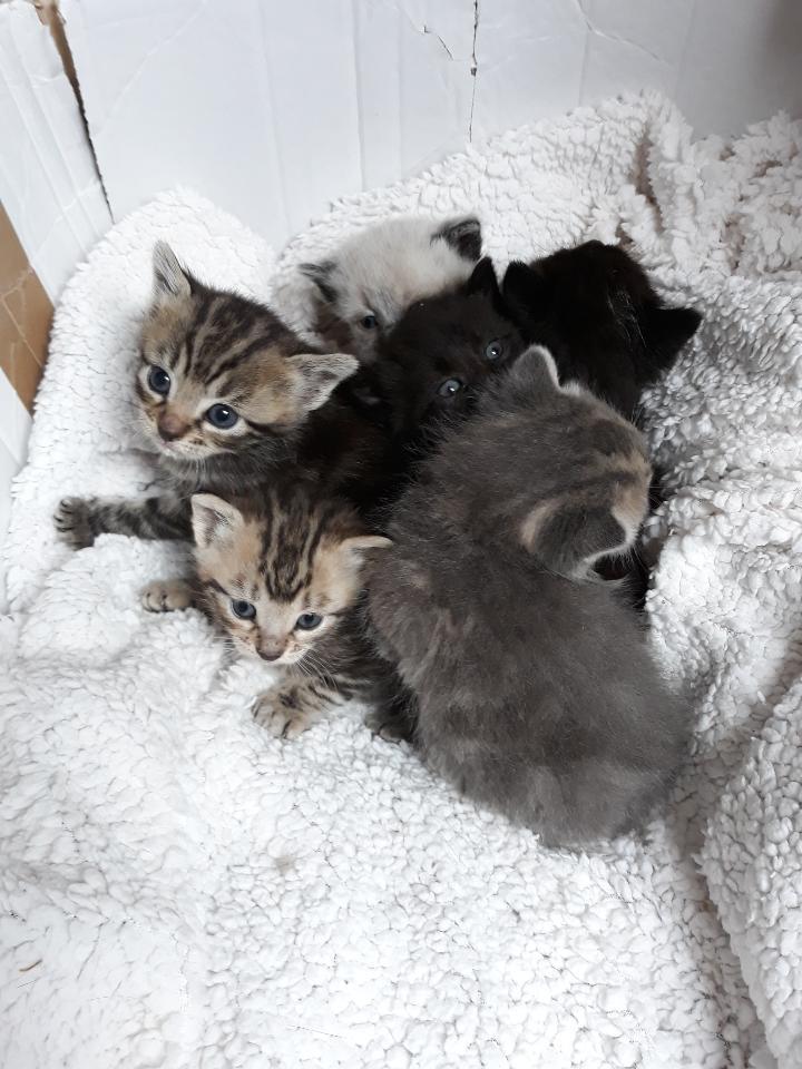 Recherche dons de lait maternisé pour chatons