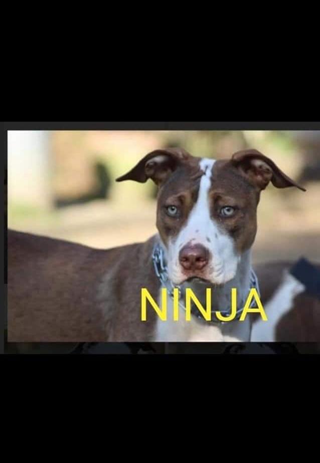 Urgent une famille pour Ninja