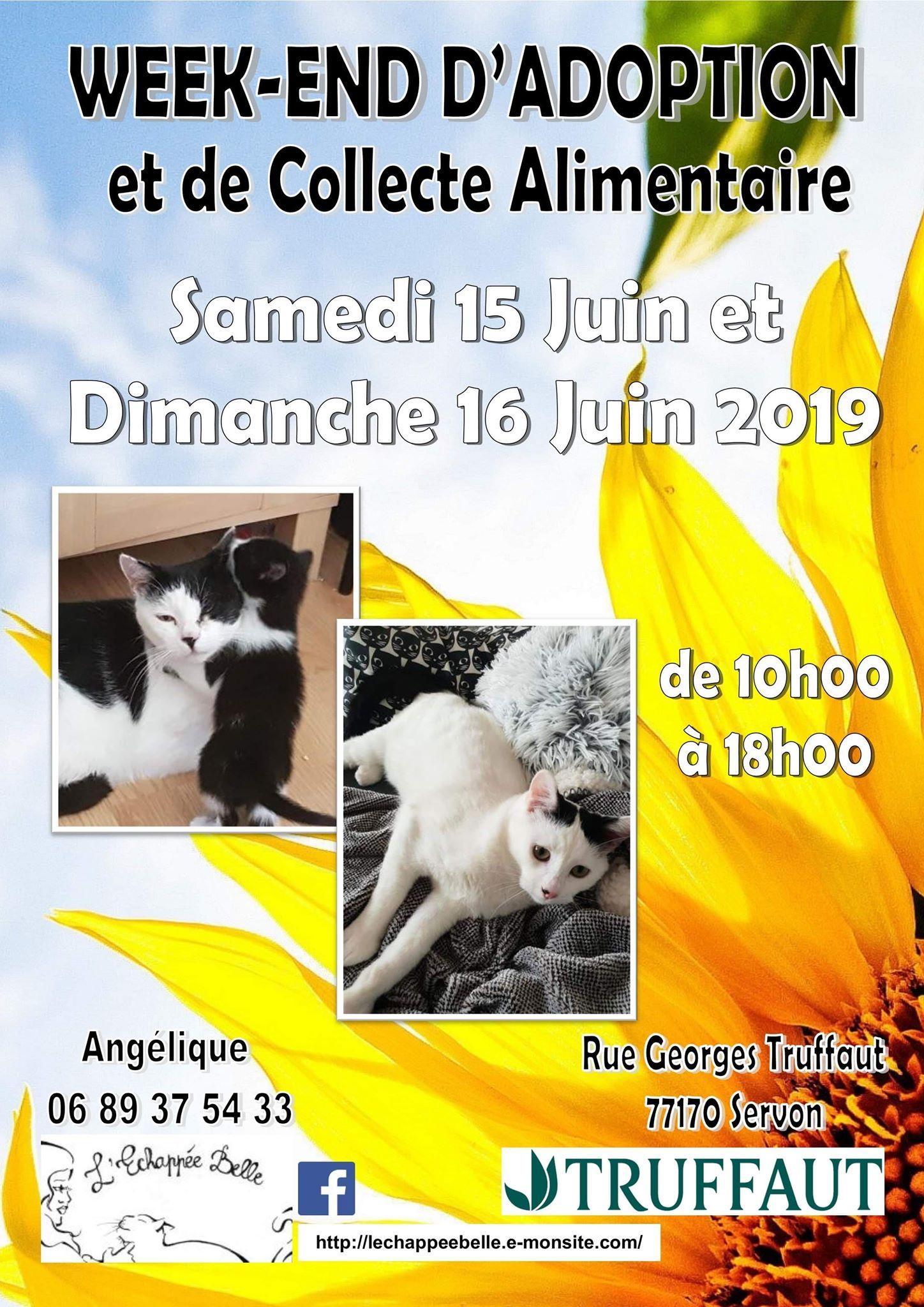 Week- end d'adoption et de collecte les 15 et  16 Juin 2019 Truffaut servon 77