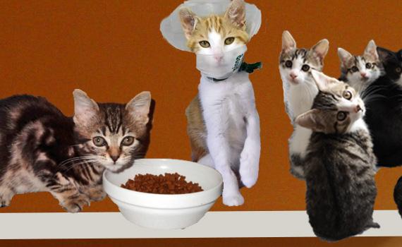 Appel aux dons pour l'accueil et le soin de plusieurs centaines de chatons dans le 95