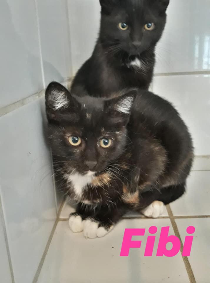 Ecole du chat de Villeparisis - mini journ adopt samedi 10 août 2019