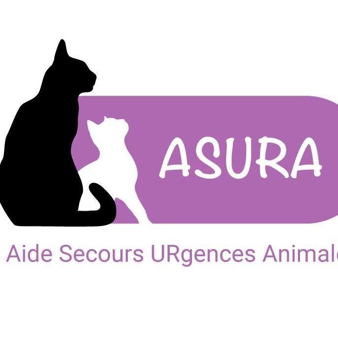 Association Asura (33) recherche des familles d'acceuil chatons et chats adultes