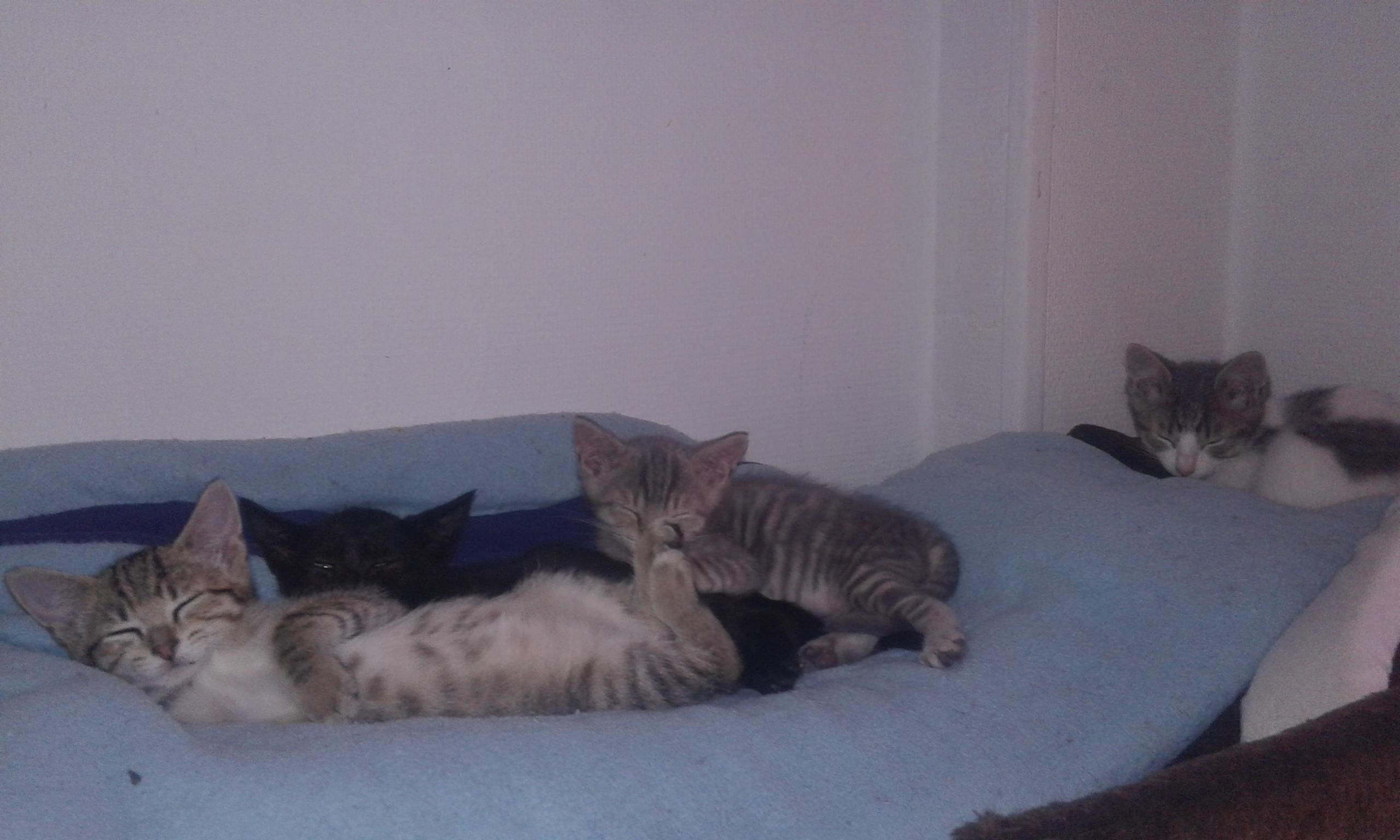 Familles d'accueil pour chats/chatons