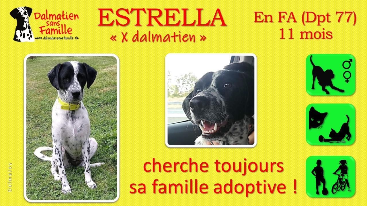 ESTRELLA, jeune croisée dalmatienne de l'association DALMATIEN sans FAMILLE est toujours à l'adoption !