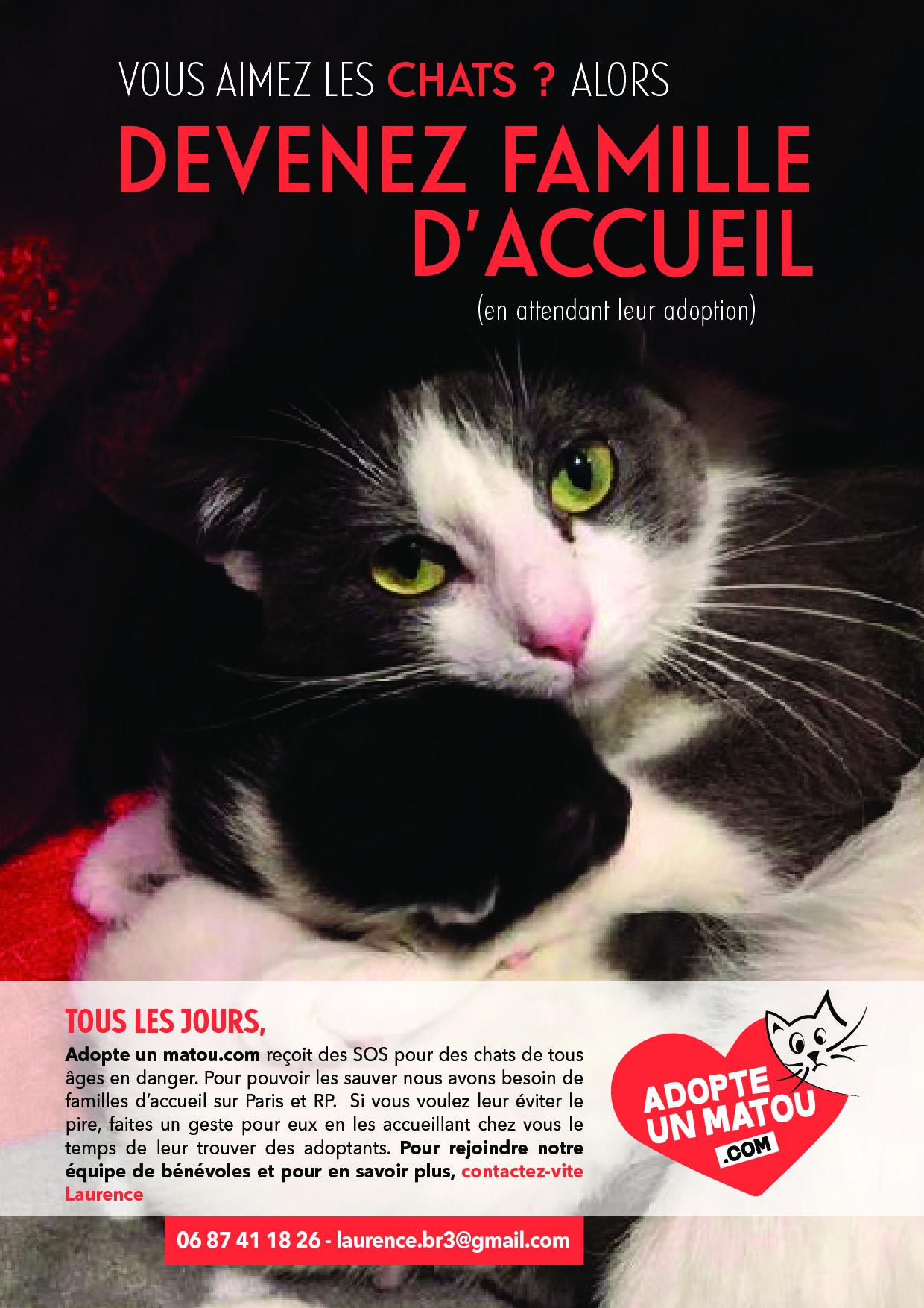 Urgent besoin FA Paris ou RP pour  sortir de la rue 2 chatonnes de 6 mois un peu craintives  et une jeune chatte gestante sociable