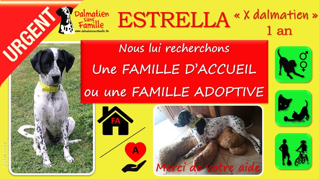 ESTRELLA de DALMATIEN sans FAMILLE cherche en URGENCE une Famille d'Accueil ou une Famille Adoptive !