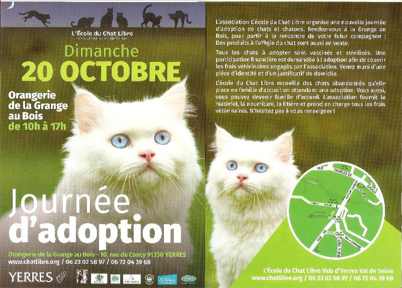 Journée d'adoptions de chats et chatons le 20 Octobre 2019 à YERRES (91)