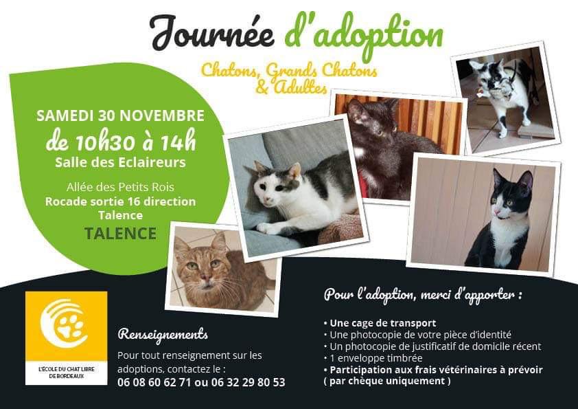 Journée d adoption chatons et jeunes adultes 30/11