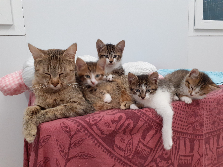 Recherche litière et nourriture chatons