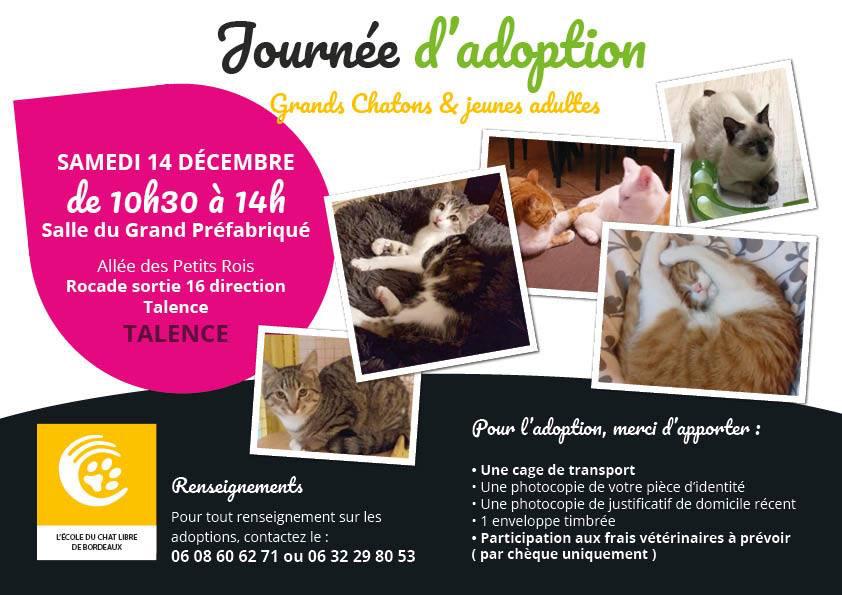 Journée d'adoption chatons et jeunes chats 14/12
