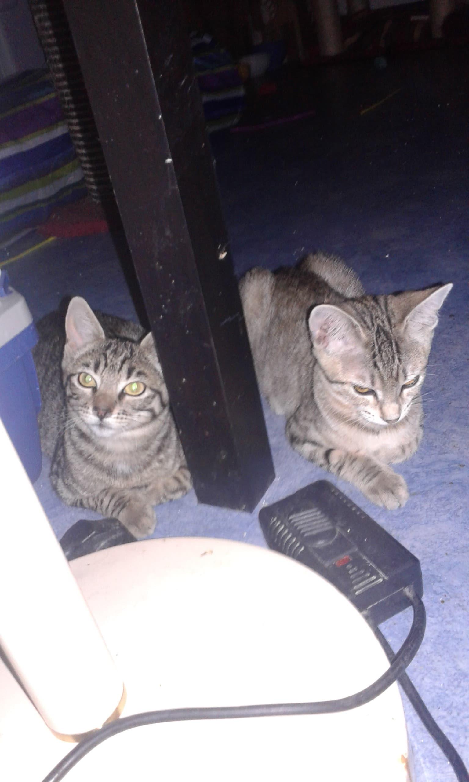Familles d'accueil pour chats