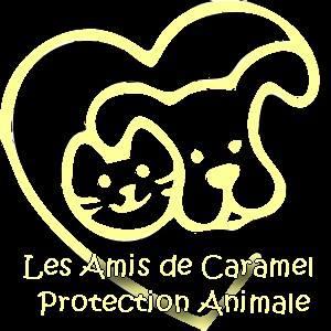 Recherche FAMILLES D'ACCUEIL pour chats et chiens