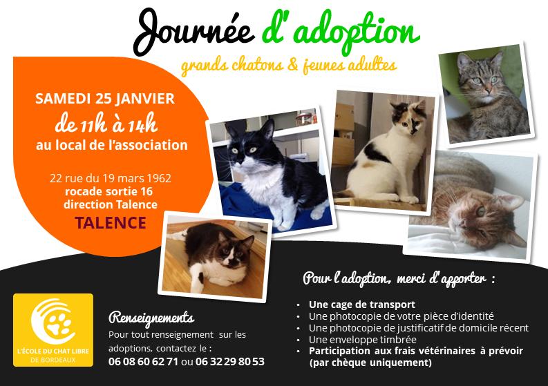 Ecole Du Chat Libre De Bordeaux Journee D Adoption Grands Chatons Et Jeunes Chats 25 Janvier 2020