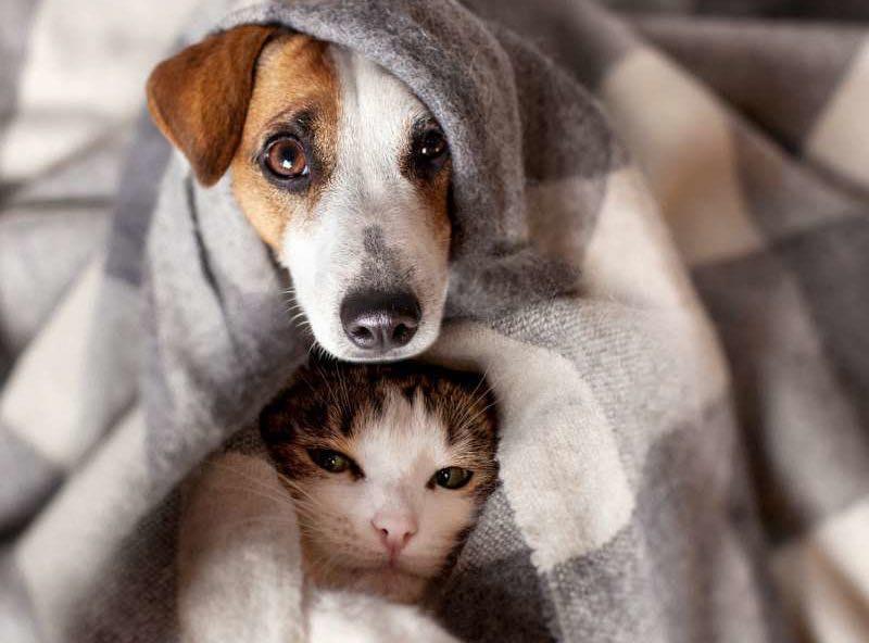 Nous avons besoin de couvertures