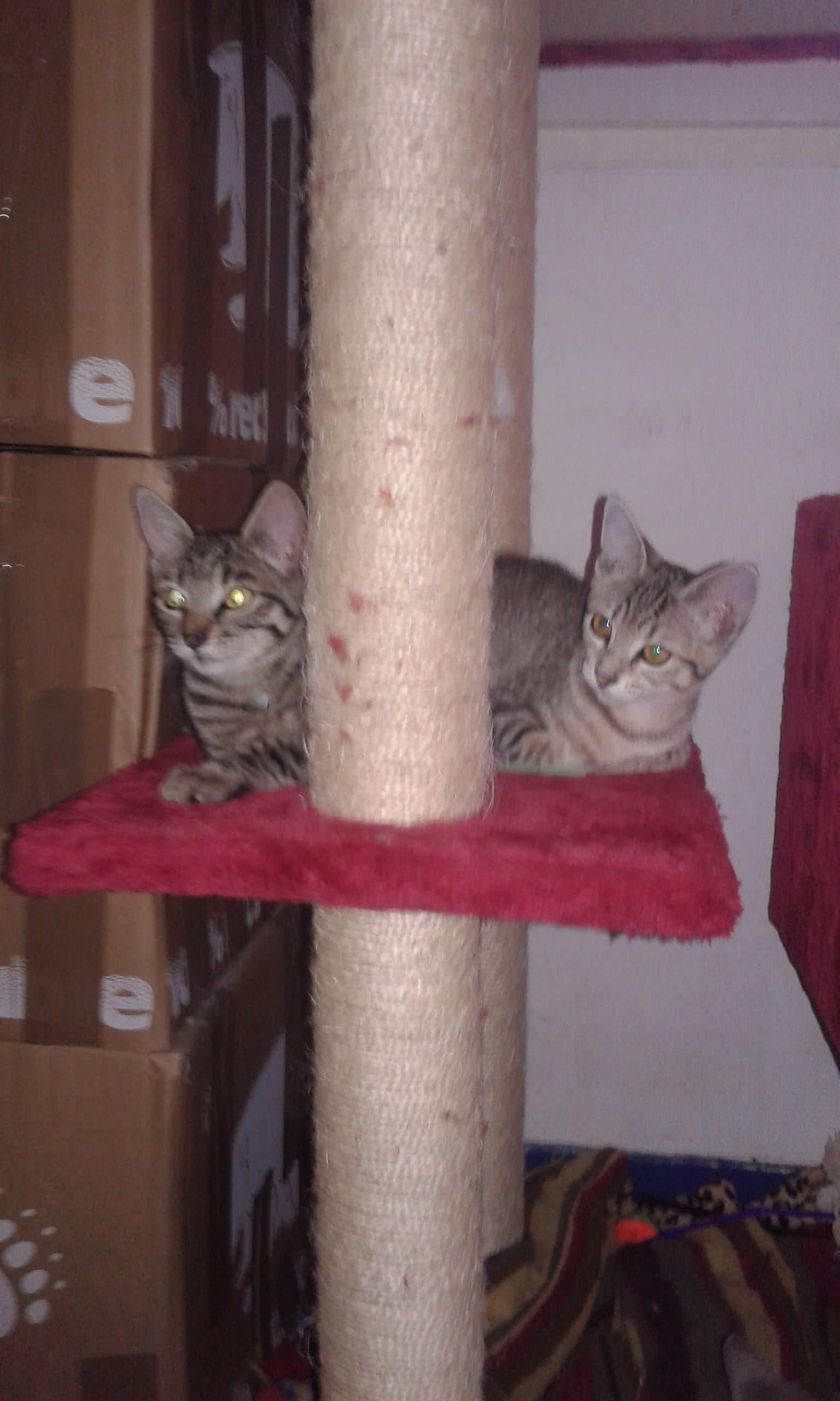 Familles d'accueil pour chats recherchées