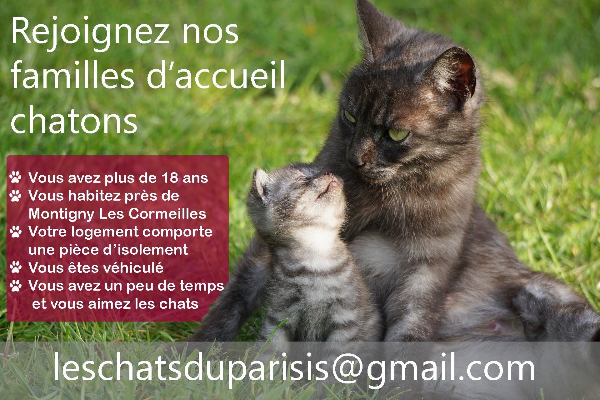 Rejoignez nos familles d'accueil chatons du val d'Oise
