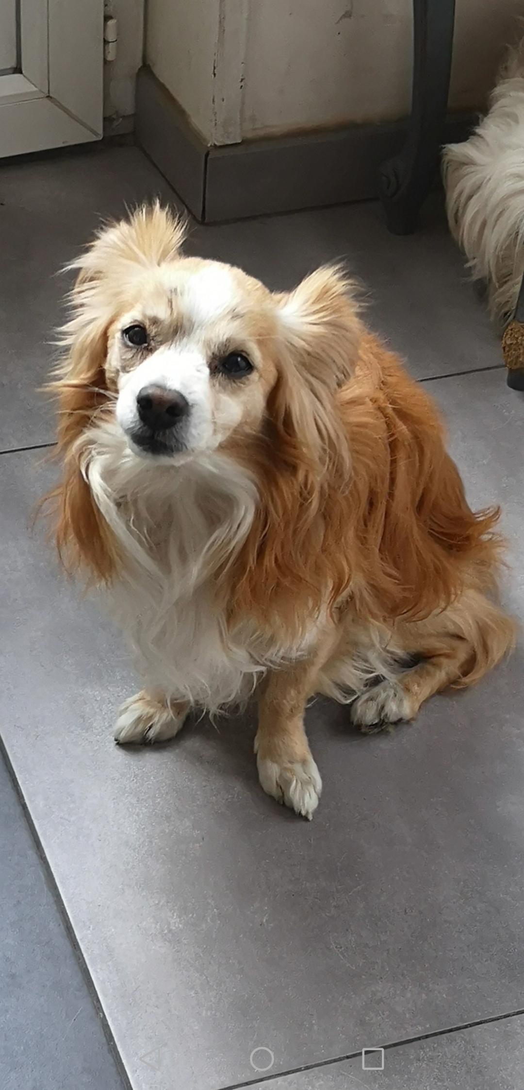 Urgent recherchons familles d'accueil pour chiens/chiots dans le 59 chiens/chiots aux alentours de Marly/Valenciennes