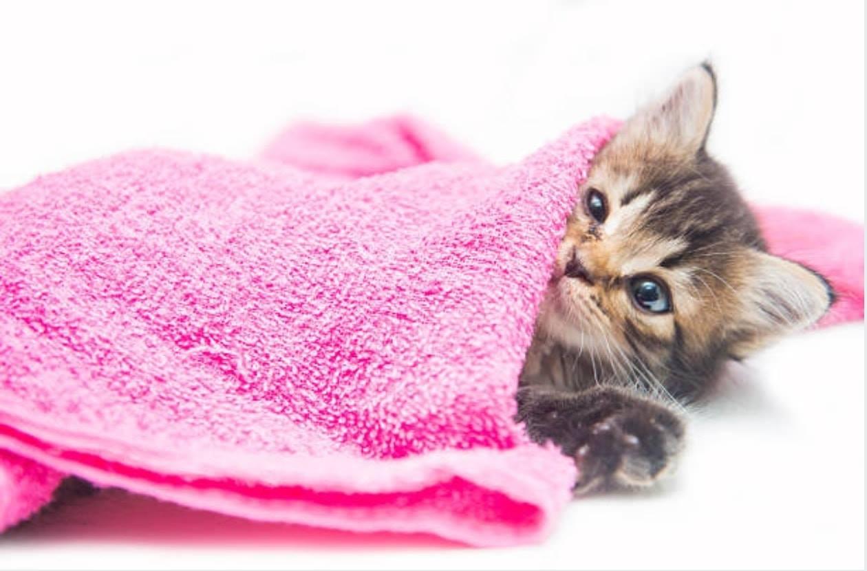 Nous avons besoin de serviettes éponge
