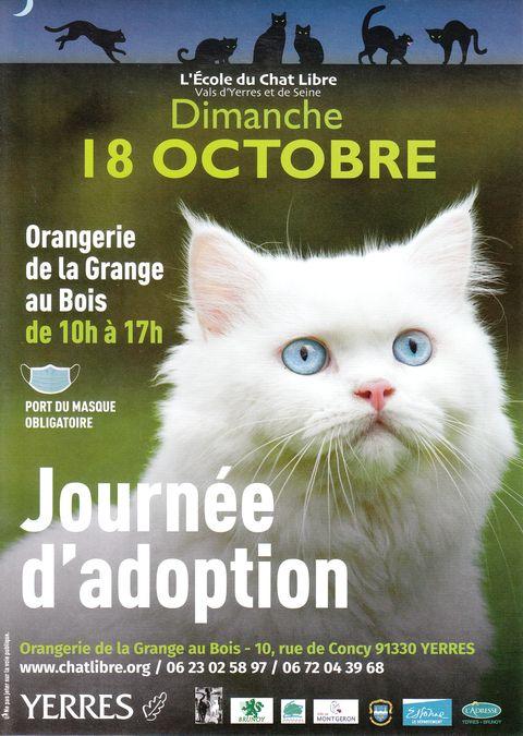 Journée d'adoptions de chats et chatons le dimanche 18 Octobre 2020 à YERRES (91)