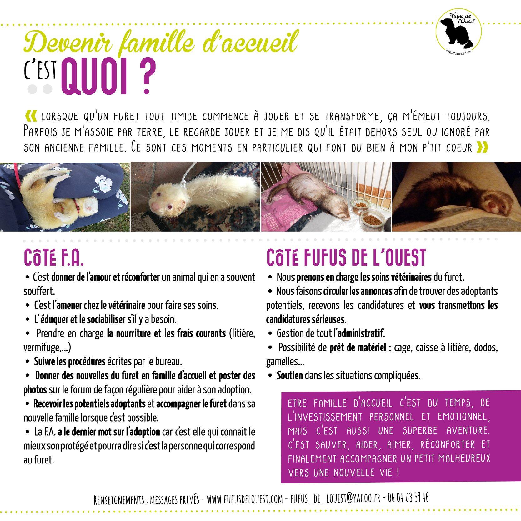 Cherche FAMILLES D'ACCUEIL pour FURETS - URGENT !