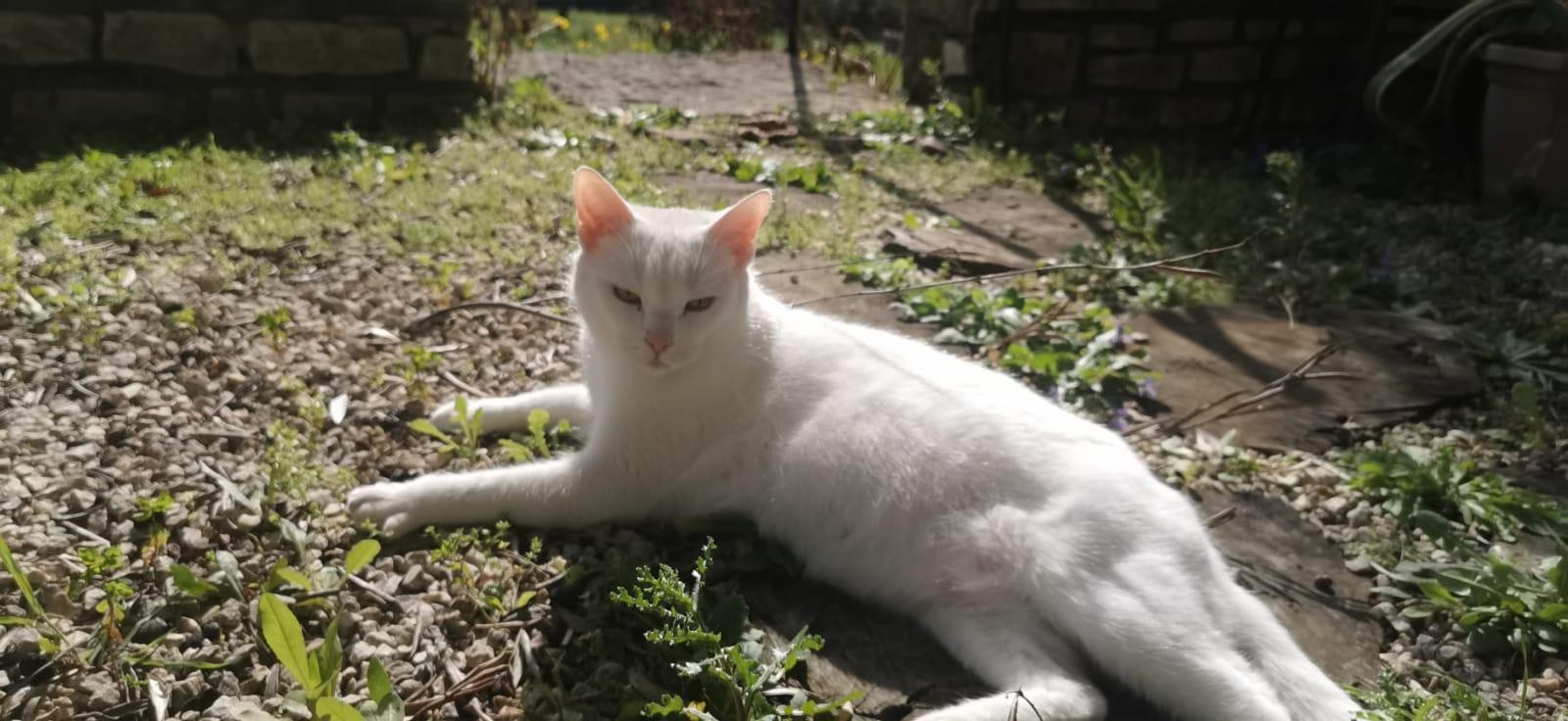 Recherche famille d accueil chat chaton