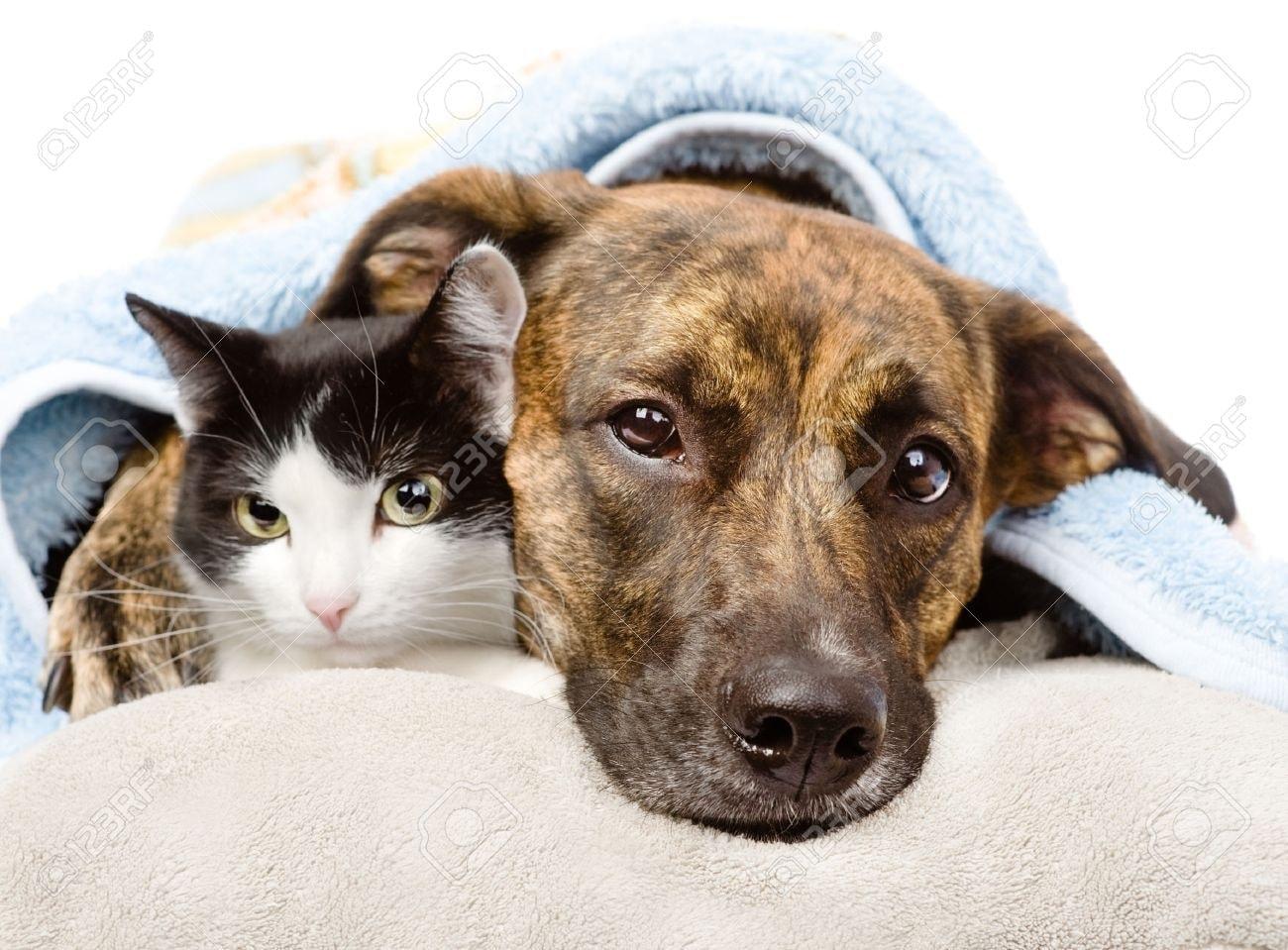 Nous avons besoin de couvertures et autres...