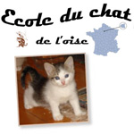 L Ecole Du Chat De L Oise Refuge Chat Region Picardie