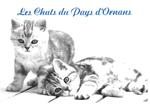 30 chats à placer