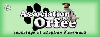 Nous recherchons des familles d'accueil chiens