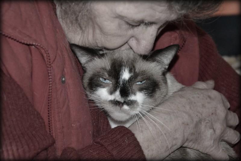 Aide aux chats
