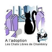 Les chats libres de chambery