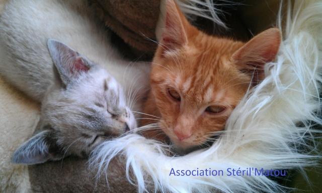 Les chats de Steril'Matou