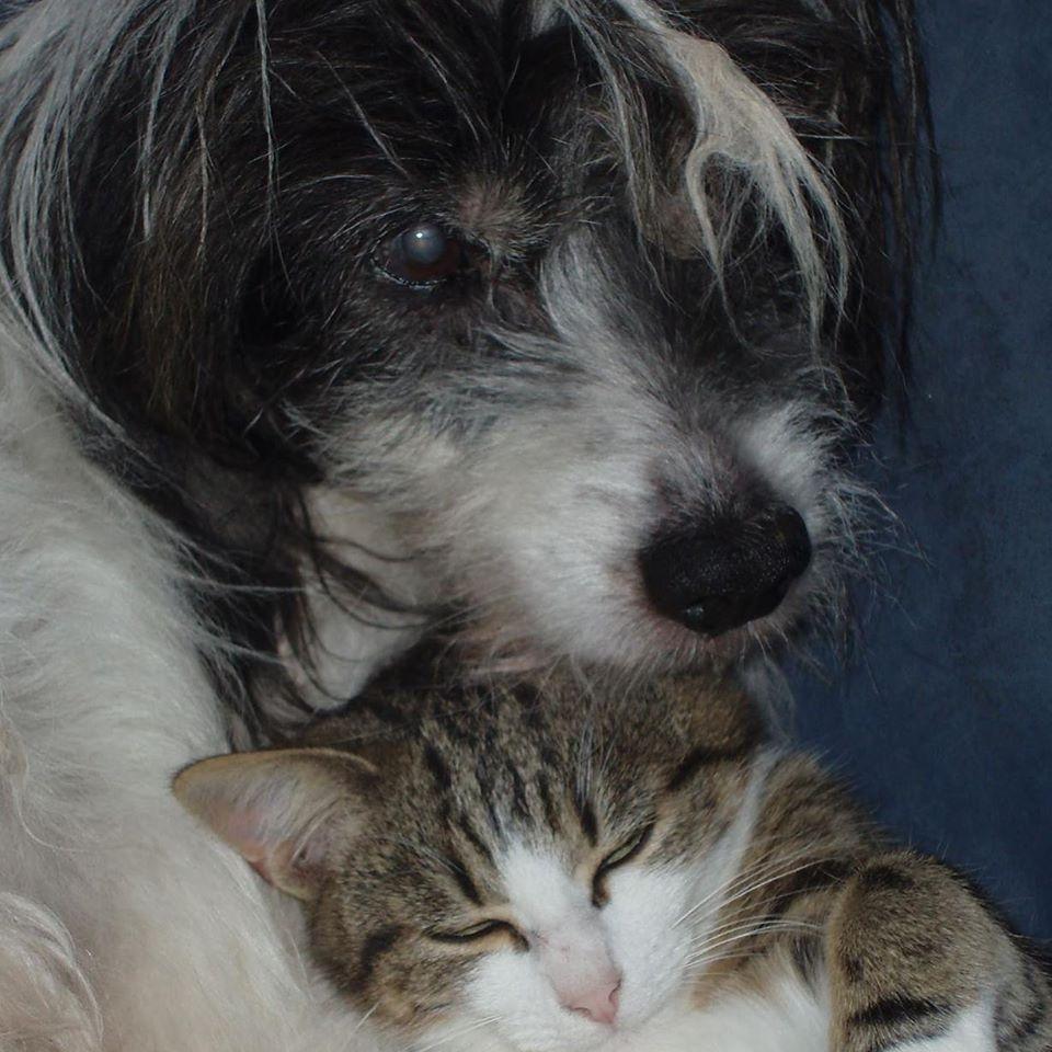 Accueil de chatons