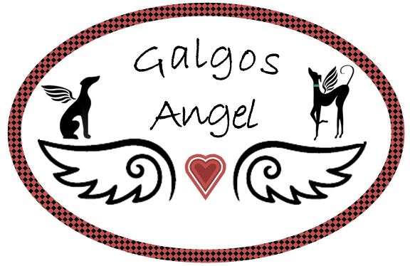 Galgos Angel