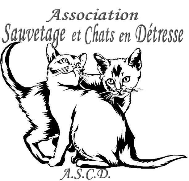 Sauvetage et Chats en Détresse