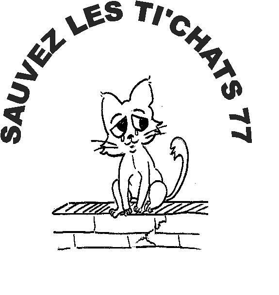 Sauvez Les Ti Chats 77 Refuge Chat Region Ile De France