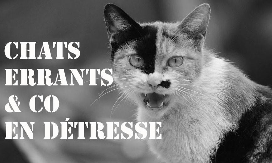 Chats errants & co en détresse