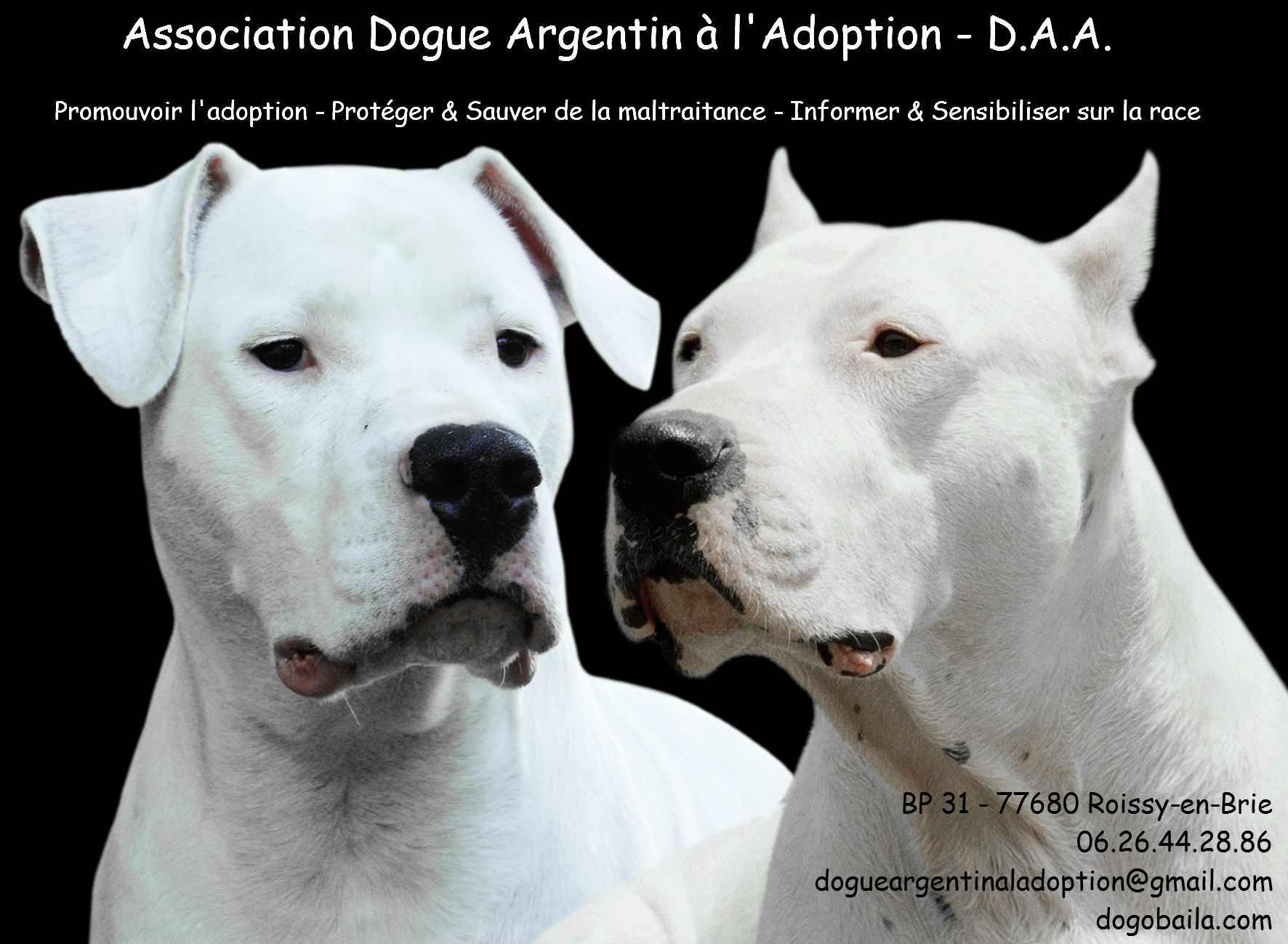 Dogue Argentin A L Adoption Refuge Chien Region Ile De France