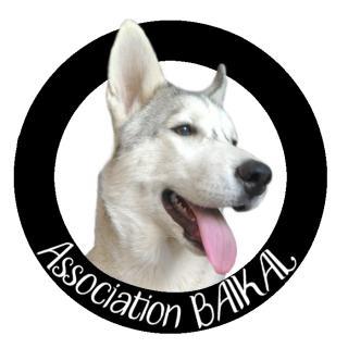 Recherche FA pour 2 chiens