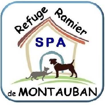 ETOo - epagneul breton 13 ans - Refuge du Ramier à Montauban (82) 5b587f0de29d4203190404
