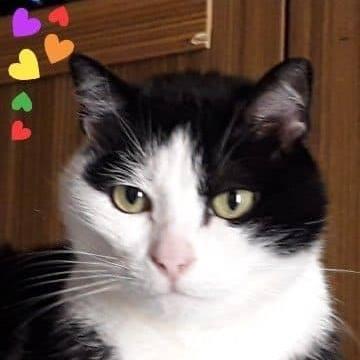 Recherche familles d'accueil pour chats/ chatons sur le 33