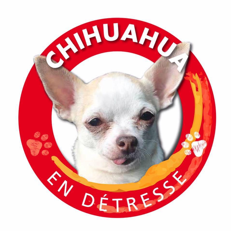 Chihuahua En Detresse Refuge Chien Region Ile De France