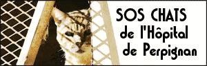SOS Chats de l'hôpital de Perpignan