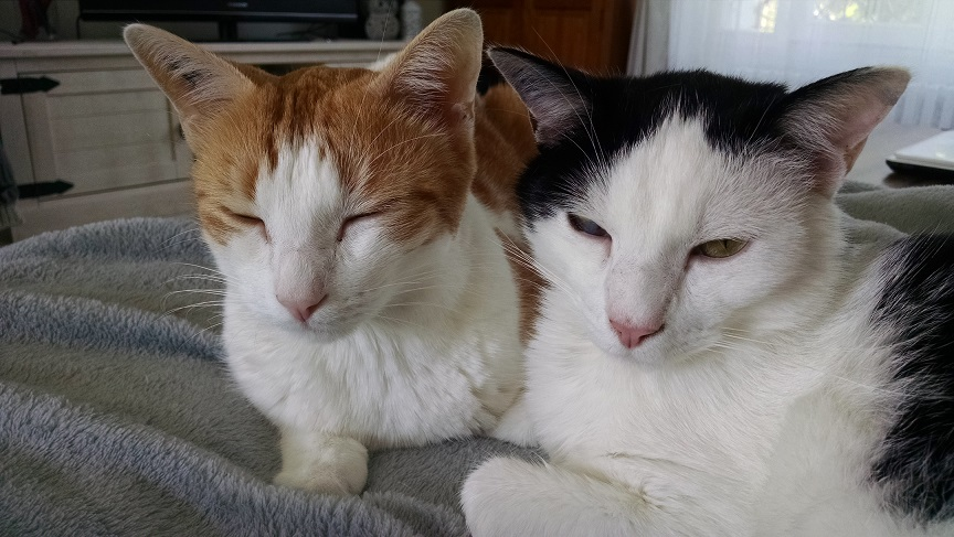 Max et Milo