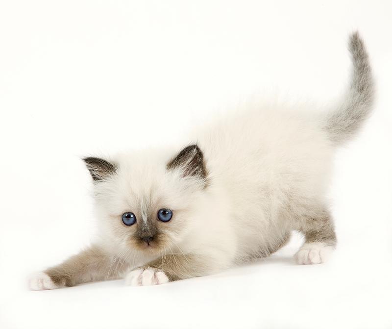Top L'arrivée d'un animal à la maison: Accueillir un chiot ou un chaton VM48