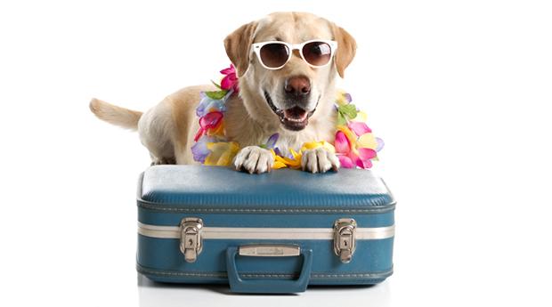 Que faites-vous de vos animaux pendant les vacances ?