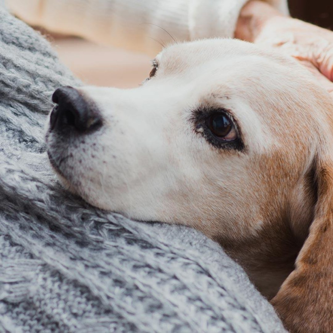 Quelle alimentation pour le chien senior ?
